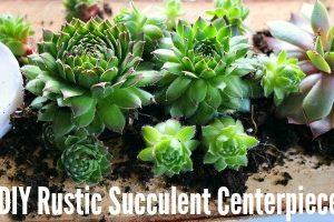 feature DIY Rustic Succulent Centerpiece